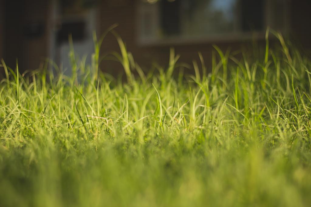 A close up shot of grass